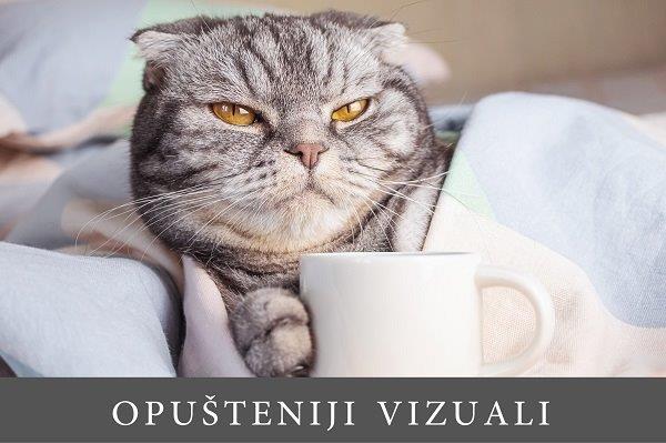 sivi mačak na krevetu drži šapu prislonjenu na šolju za kafu